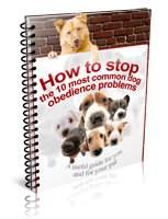 how to stop 10 common dog obedience problems