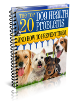 the top 20 dog health problems